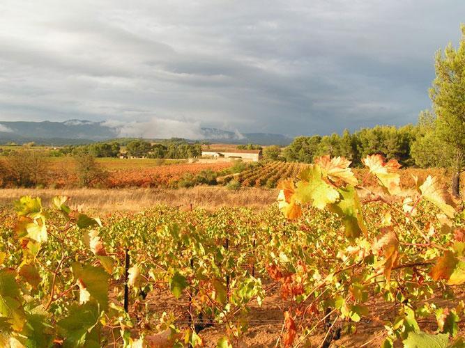 Chateau Massiac Vineyard