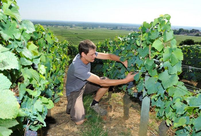 Winemaker Benoit Vignes