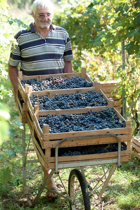 Tommaso Bussola (photo from ww.winetime.ua)