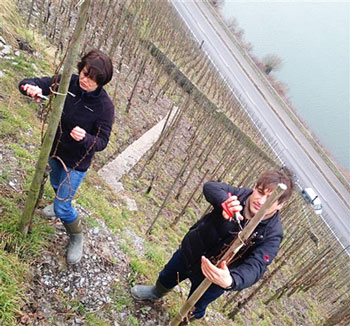Konstantin Weiser and Alexandra Künstler working their steep vineyards in the Middle Mosel.