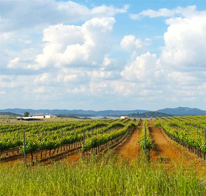The Vineyards of Aldeia da Luz