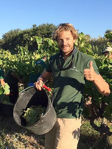 Pepe Raventós during Harvest