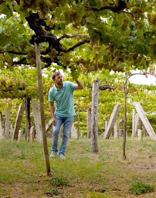 Eulogio Pomares among the Albariño Vines