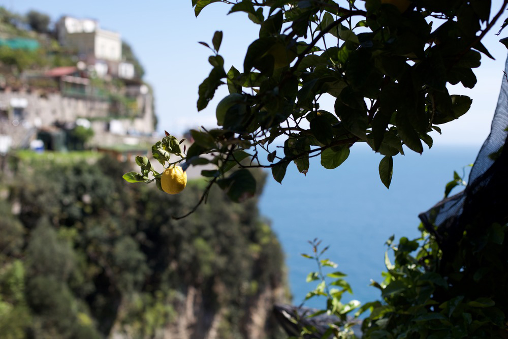 The Amalfi Coast is known for its spectacular lemons.