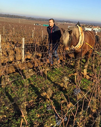 Cyril de Benoist uses a horse to plow his biodynamic vineyards.
